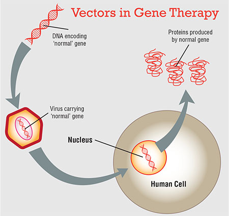 Image result for Ophthalmic Genetics and Gene Therapy